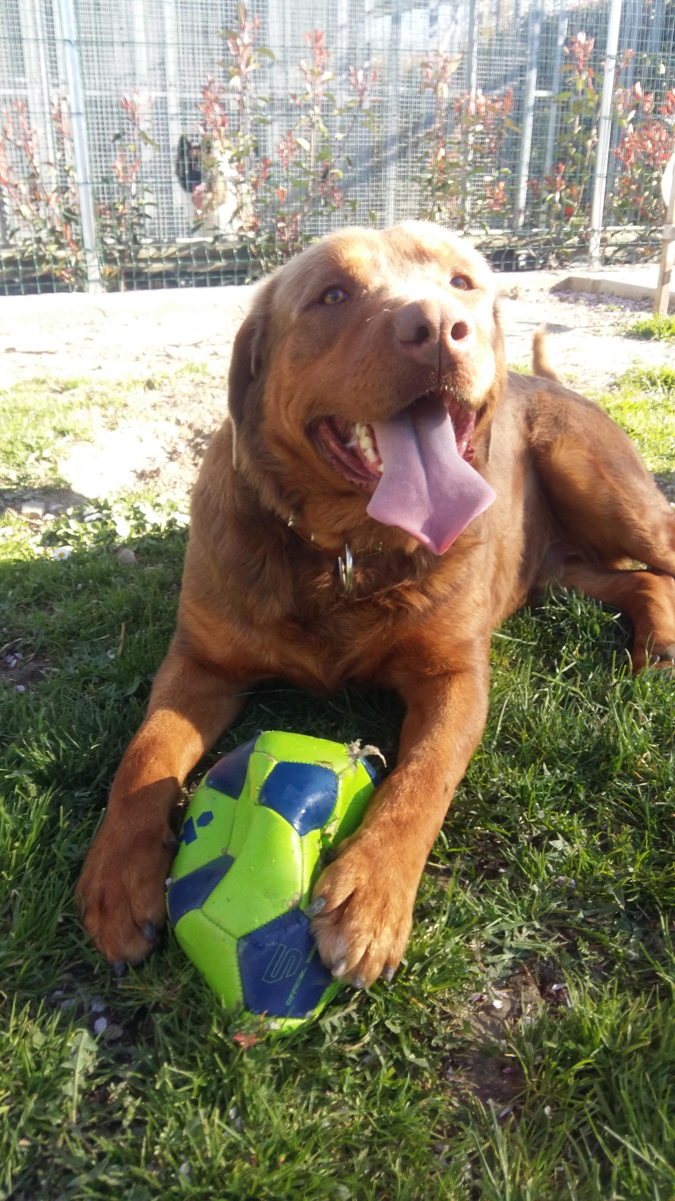 cane con palla